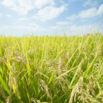 相続税及び贈与税における農業振興地域内の農用地評価について