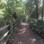 【写真で紹介】井の頭公園にある、ほぼ木陰・大部分が土・1周1.1kmのジョギングコース