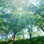 2018年度税制改正で森林環境税を2024年度から導入予定 実はすでに導入されている